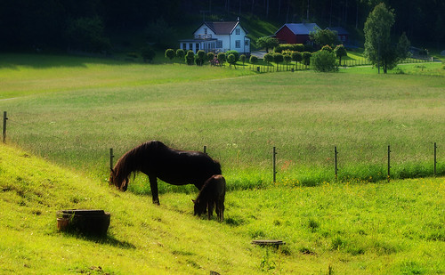 summer horses horse landscape sweden country olympus sommar landskap gullberg e520 zuiko70300mm olympuse520 100commentgroup touraroundtheworld peternyhlén mygearandme photoshopelements9