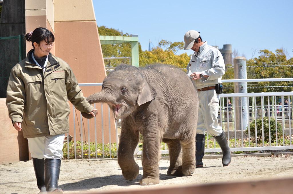 アジアゾウの赤ちゃん「マーラ」