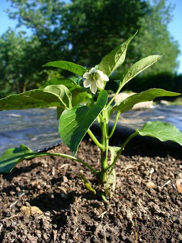 2012-05-07 - Garden - 0008