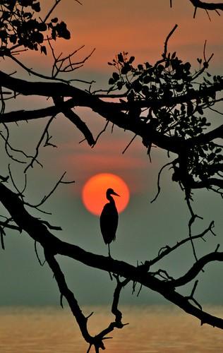 sunset beach silhouette crane johor muar thegalaxy westmalaysia muarriver mygearandme