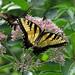 2010 - 07 - 18 - Pisgah Bridge Butterflies #3 by Mississippi Snopes