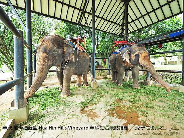 華欣 葡萄酒莊園 Hua Hin Hills Vineyard 華欣旅遊景點推薦 44