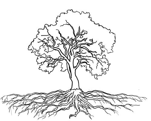searching for the ideal oak