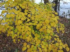 Autumn colors Walnut Creek Lake Raleigh NC 0491