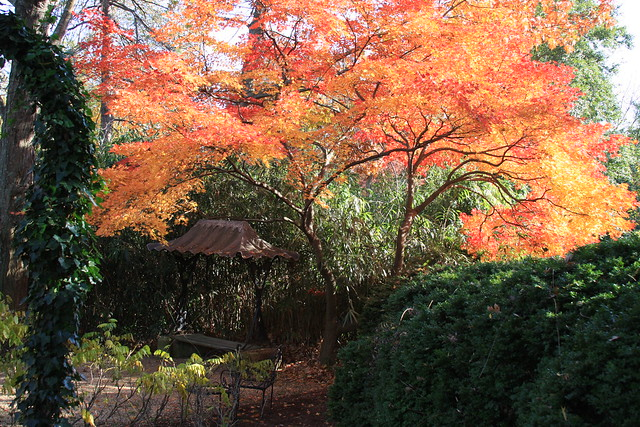 Georgetown in the Fall: Dumbarton Oaks