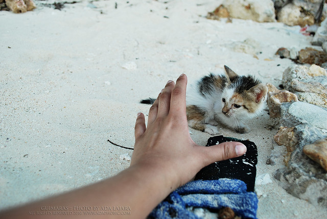 Kitten in Ave Maria Islet Beach
