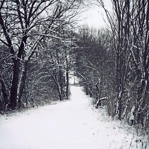 trees winter snow landscape denmark vinter path sti danmark winterwonderland 2010 sne kolding ådalen thereturnofwinter canoneos5dmrkii alpedalen koldingådal