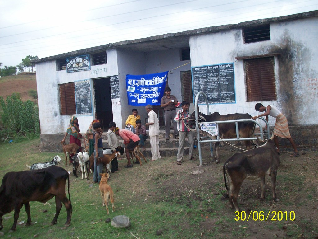 Veterinary camp
