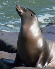 Sexy sea lion