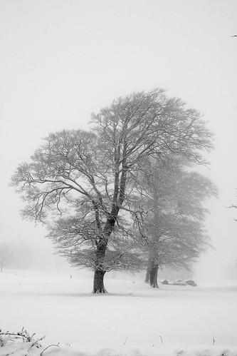 trees snow fog landscape scenery scenic explore golfcourse castlebar onexplore explored fullard frankfullard