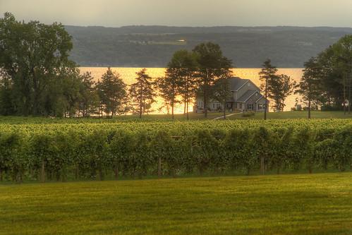 usa lake ny newyork sunrise canon vineyard grapes fingerlakes cayuga hdr ovid xti elmbeach