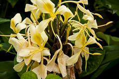 shrub, erythronium, flower, yellow, plant, macro photography, flora,