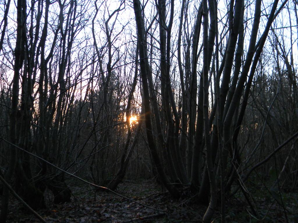 Setting sun through trees Knockholt to Otford