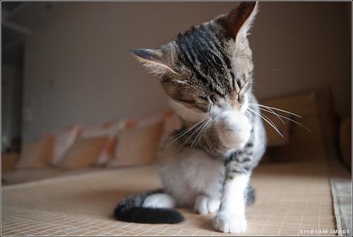 戆西西 猫咪 kitty