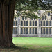 wells cathedral, cloister yew