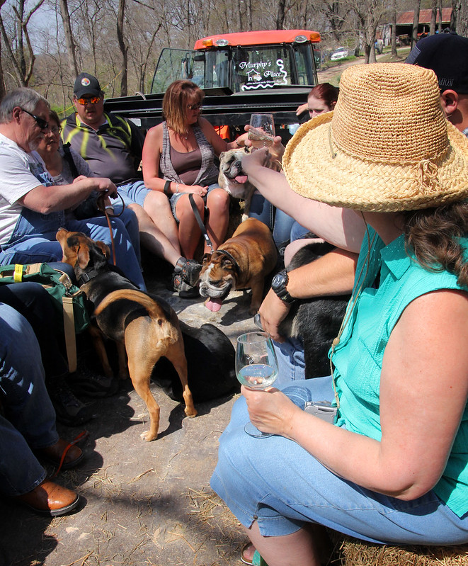 2014 Wine & Woof Fest Highlights