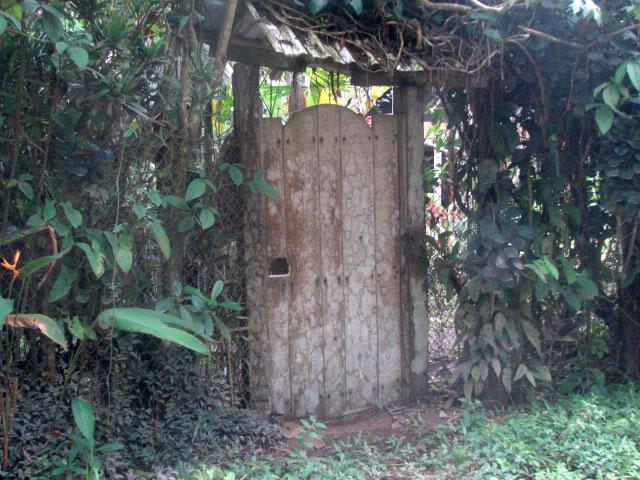 jungle-doorway