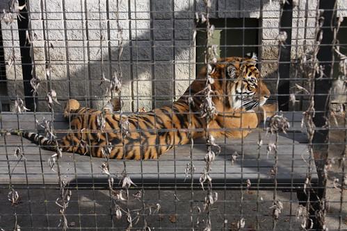 Toronto Zoo 2010