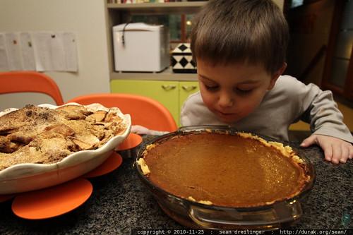 sequoia sniffs the pumpkin pie he helped make