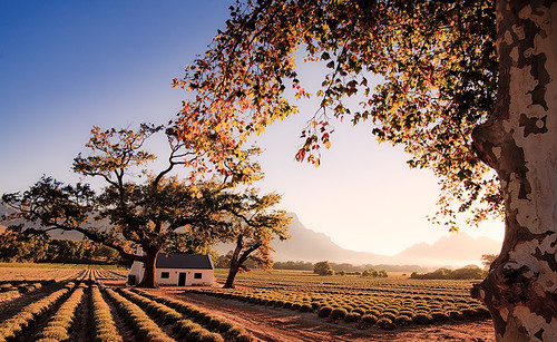 South Africa - Franschhoek: Bliss