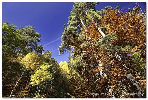 Pyrenees, Fall 2010 / Pirineos, Otoño 2010