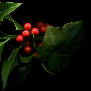THE HOLLY AND THE IVY... THE COLOURS OF CHRISTMAS