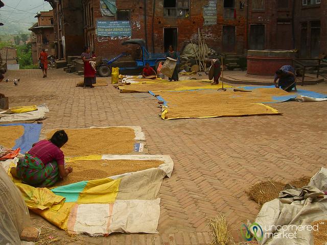 Grain Drying in Bhaktapur, Nepal