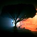 Tree by PowerLlama