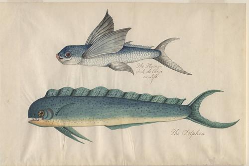 Bibliodyssey natural south carolina for Plenty of fish lincoln ne