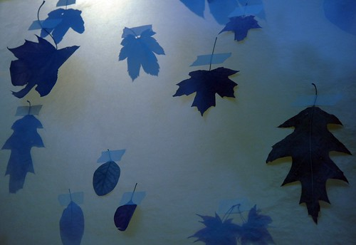 Leaves, transparent paper background, anthropologie, Seattle by Wonderlane