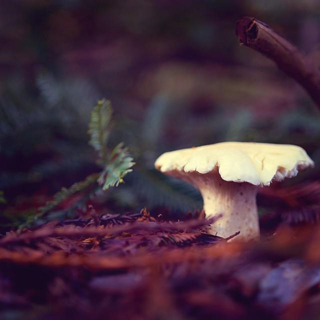 { fungi - mushroom - shroom }