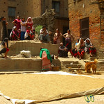 Drying Grain in the Sun in  Bhaktapur, Nepal