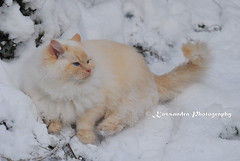 Timmie enjoying the snow