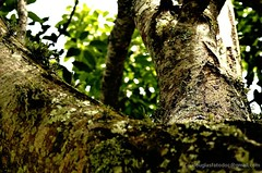 �rvore tronco e luz