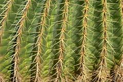 cactus facture