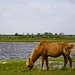 Assateague Island Maryland by erhewitt50