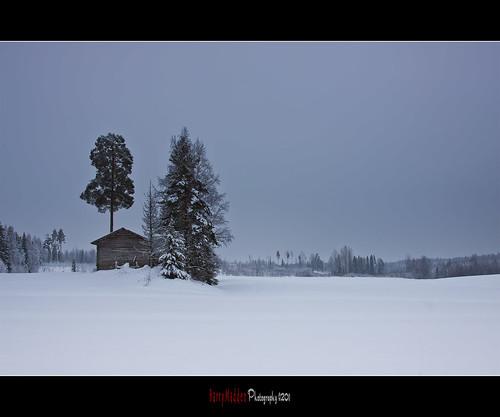 trees winter snow building tree barn forest suomi finland landscape countryside farmland explore talvi lappeenranta