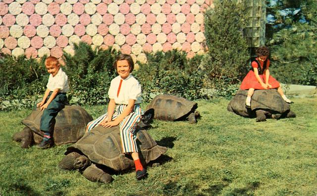 Black Hills Reptile Gardens Rapid City Sd Flickr Photo Sharing