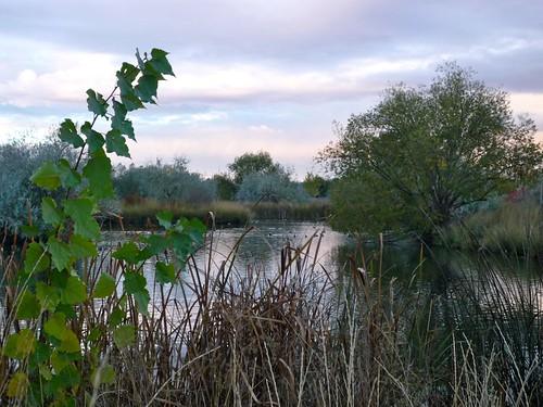 trees sky water pond flora ducks idaho nampa northpond wilsonponds