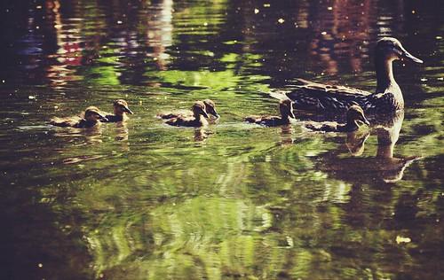 Sunday Stroll by Flickr User: Ashley Harrigan