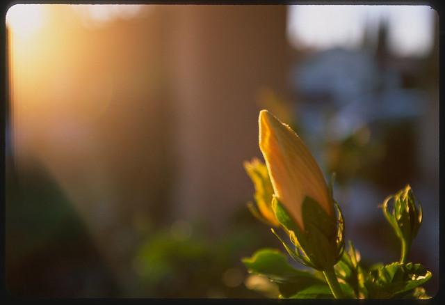 Flower Flare