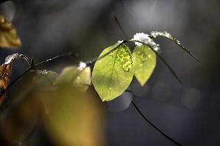 micro-climate
