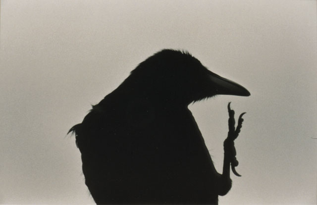 Erimo Cape, 1976, from The Solitude of Ravens, by Masahisa Fukase