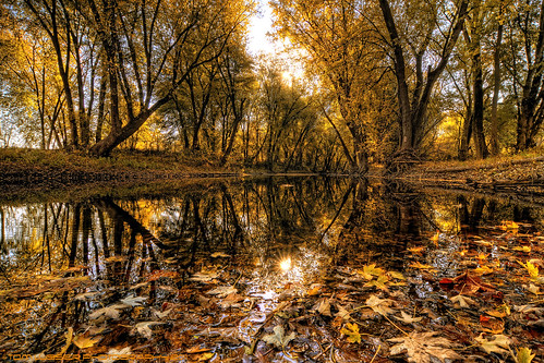 tree water forest sunrise reflections river landscape virginia nikon fallcolor fallcolors potomacriver d300 loudouncounty tomlussier landscapespec2011