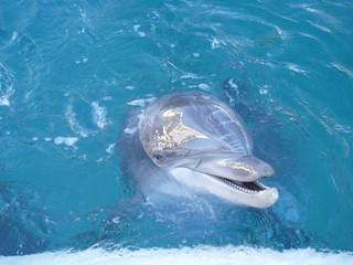 Dolphins III