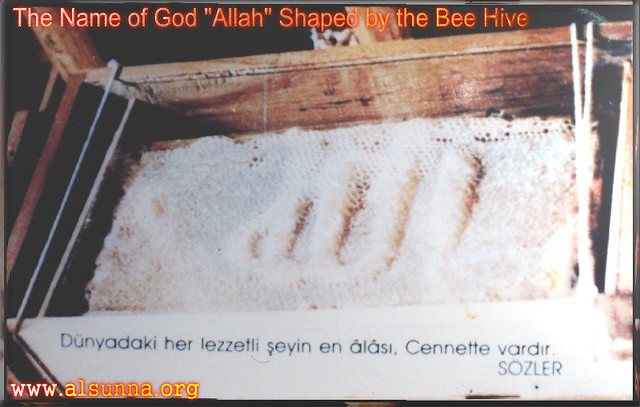 name of allah almight on honey