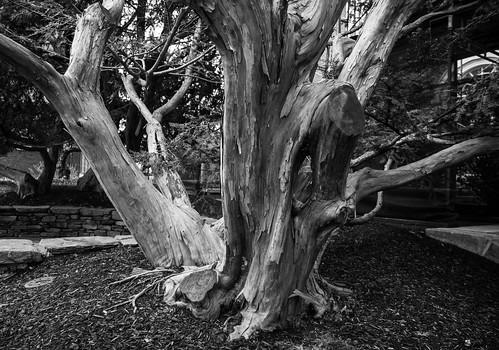 Radcliff Tree Trunk