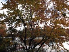 Walnut Creek Lake Raleigh NC 0494