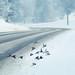 Winter Birds by ~ Maria ~