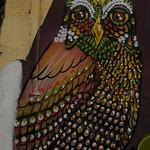 Wise Bird of Valparaiso, Chile